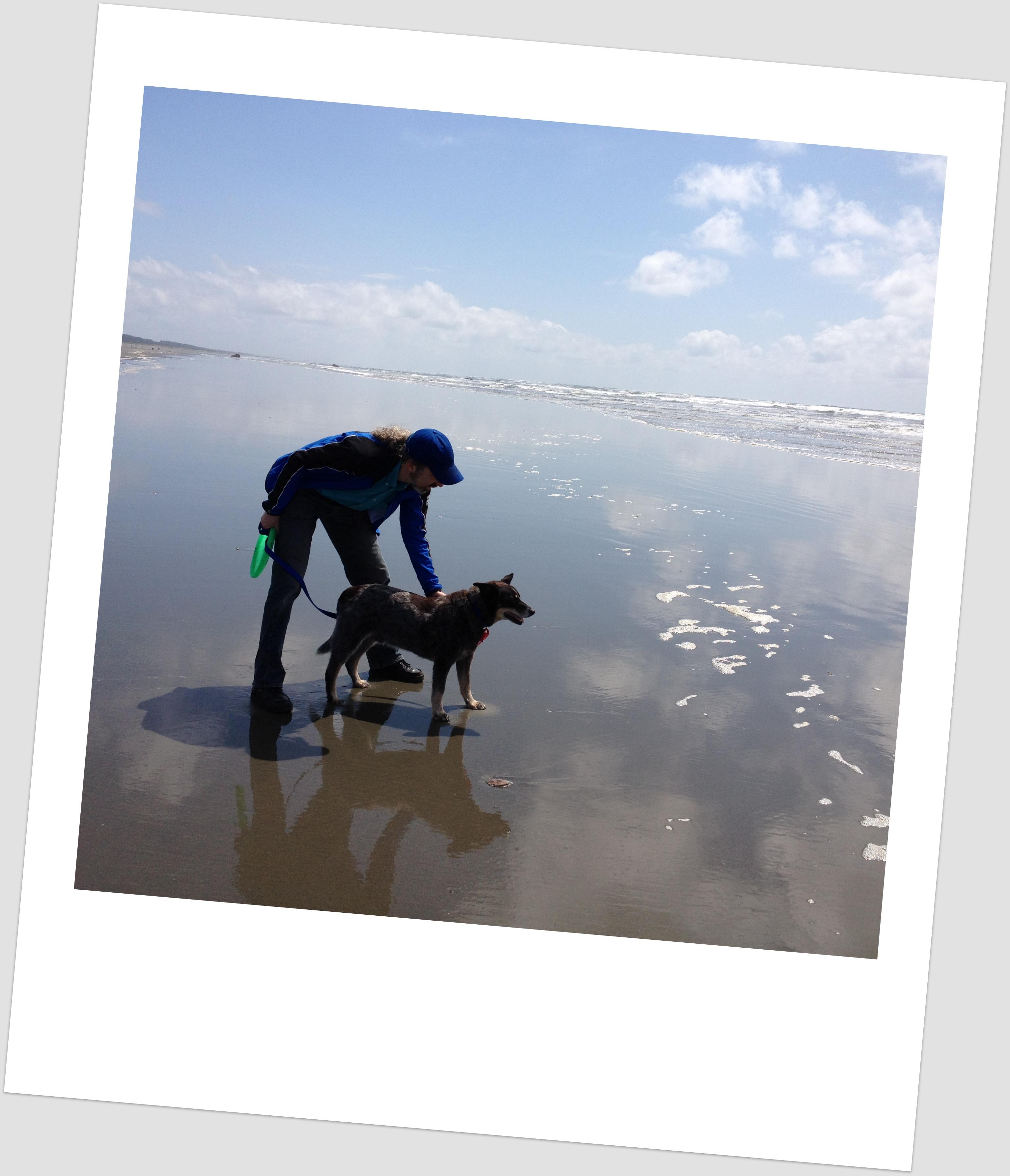 Alki Beach Dog Friendly