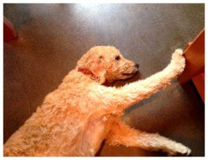 Winery dog at Rotie Cellars