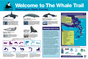 The Whale Trail signs help identify common marine life in Elliott Bay.