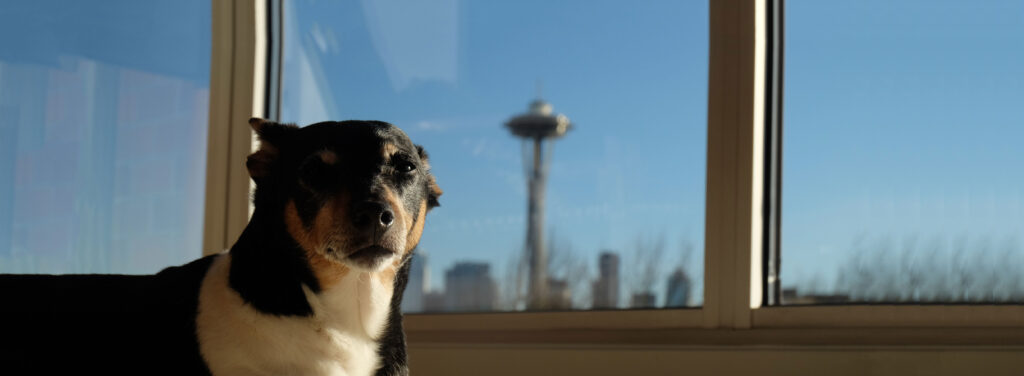 Dog-Friendly Hotels | Visit Seattle