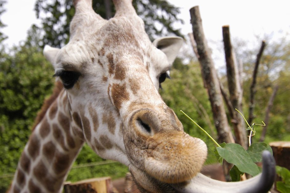 Photo: Ryan Hawk for Woodland Park Zoo